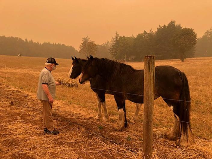 "Guy Urbani, Ellen Urbani's father, feeding the visiting draft horses on her farm in in West Linn, Oregon, on Sep. 10. <span class=""copyright"">Courtesy of Ellen Urbani</span>"