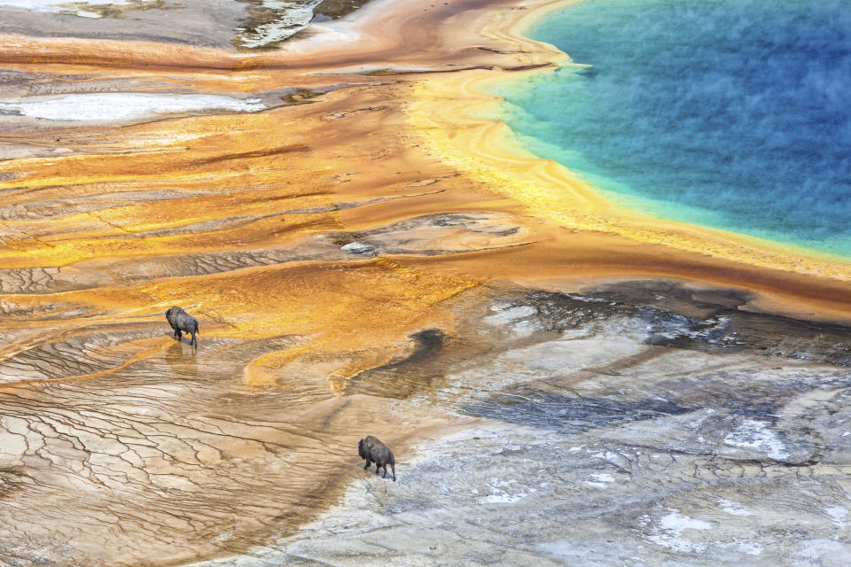 yellowstone Credit: Daniel Osterkamp. Moment. Getty Images