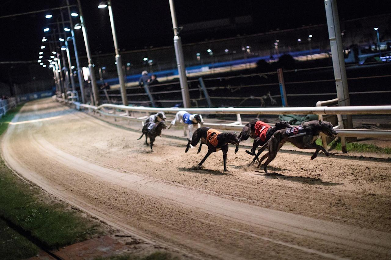 Gone to the dogs: Nearly 90 years of greyhound racing ends as Wimbledon hosts its final race