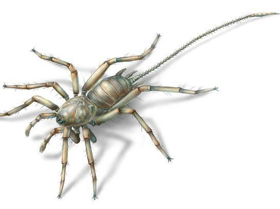 The Cretaceous arachnid Chimerarachne yingi was found trapped in amber after 100 million years. (University of Kansas )