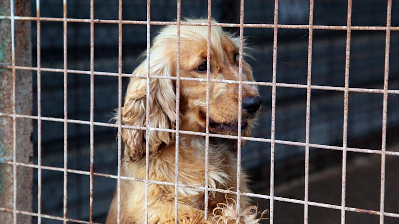 Vic puppy farm owners fined $185k