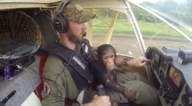 The video is touching hearts around the world. Source: Lwiro Primates/ Facebook