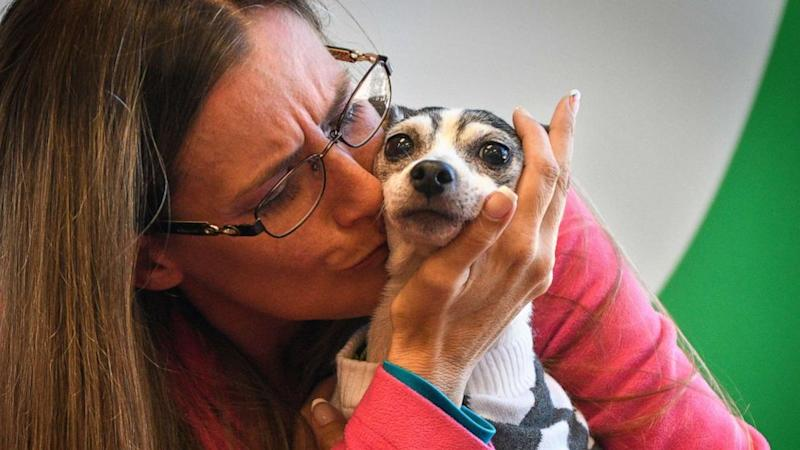 Dog missing since 2007 reunites with her owner 1,100 miles away
