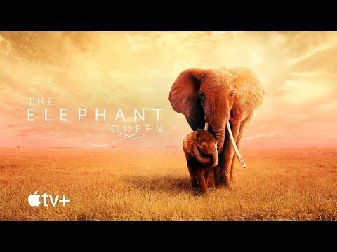 """<p>Narrated by Chewitel Ejiofor, <em>The Elephant Queen</em> is a documentary that follows an elephant herd across Africa. Pair a stunning landscape with the incredibly soothing English accent that Ejiofor brings, and you'll literally feel your blood pressure start to drop a bit. A bit less aggressive than the unforgiving worlds of <em>Planet Earth</em> and <em>Dynasties</em>, <em>The Elephant Queen</em> is Apple TV+'s most comforting and visually pleasing offering.—<em>Justin Kirkland</em></p><p><a class=""""link rapid-noclick-resp"""" href=""""https://go.redirectingat.com?id=74968X1596630&url=https%3A%2F%2Ftv.apple.com%2Fus%2Fmovie%2Fthe-elephant-queen%2Fumc.cmc.1ybrwww83rknjtwiuuemjfbvq%3Faction%3Dplay&sref=https%3A%2F%2Fwww.redbookmag.com%2Flife%2Fg36916425%2Fbest-apple-tv-plus-shows%2F"""" rel=""""nofollow noopener"""" target=""""_blank"""" data-ylk=""""slk:Watch Now"""">Watch Now</a><br></p><p><a href=""""https://www.youtube.com/watch?v=e8TsCQmngFk+"""" rel=""""nofollow noopener"""" target=""""_blank"""" data-ylk=""""slk:See the original post on Youtube"""" class=""""link rapid-noclick-resp"""">See the original post on Youtube</a></p>"""
