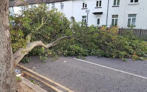 a branch in a road in Grays, Thurrock, Essex,  - Credit: Gary Malley/PA