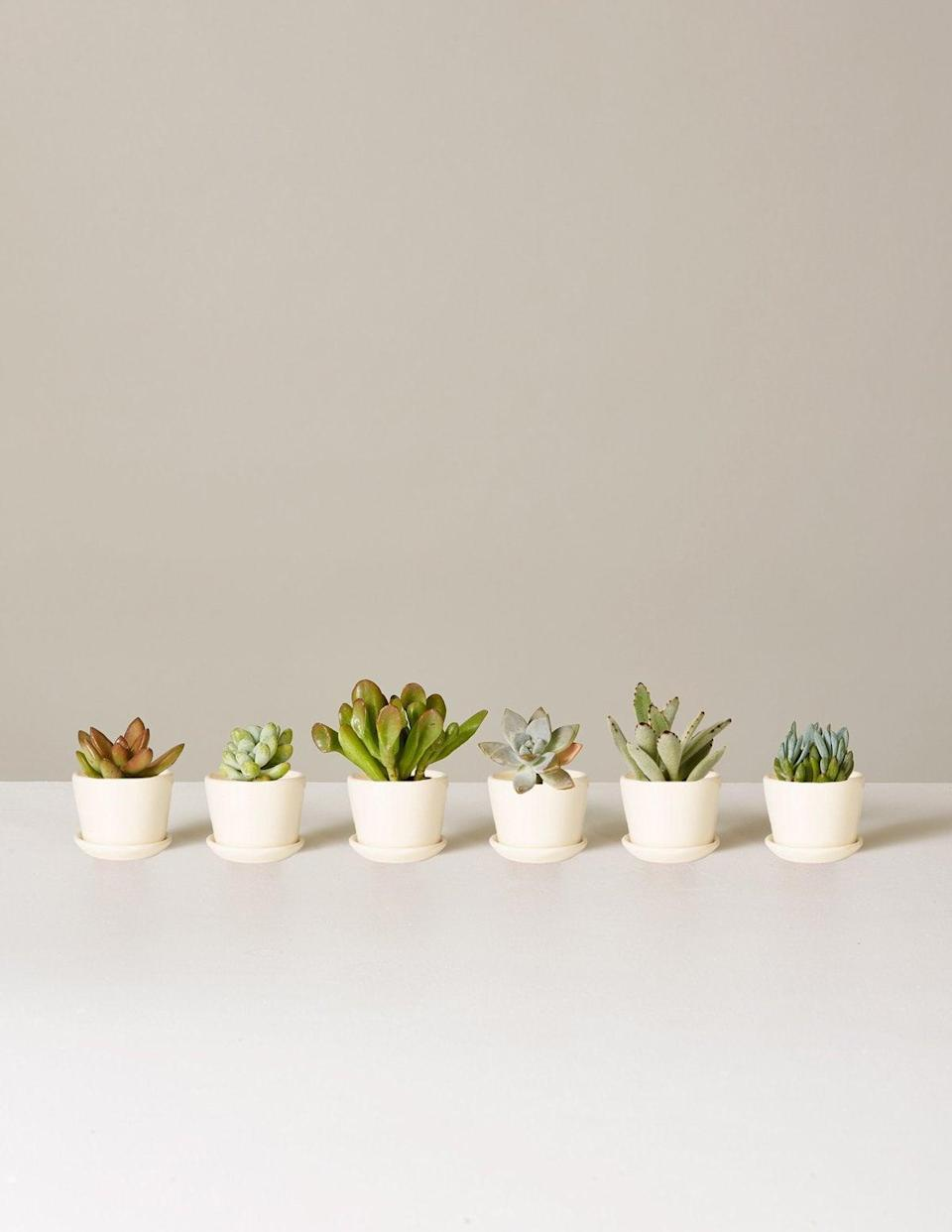 "<h2>Potted Succulent Assortment<br></h2>How does your garden grow? Ideally, no bigger than 2 inches, which is the height of this mini succulent assortment by The Sill. The ceramic pots come in white or black, and are the perfect housewarming gift for someone moving into a bite sized abode. <br><br><strong>The Sill</strong> Potted Succulent Assortment, $, available at <a href=""https://go.skimresources.com/?id=30283X879131&url=https%3A%2F%2Fwww.thesill.com%2Fproducts%2Fpotted-succulent-assortment"" rel=""nofollow noopener"" target=""_blank"" data-ylk=""slk:The Sill"" class=""link rapid-noclick-resp"">The Sill</a>"