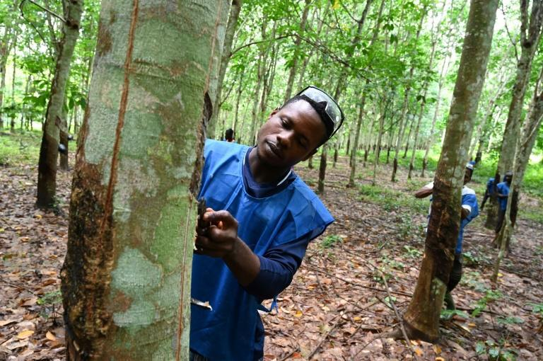 Tens of thousands of people work in Ivory Coast's rubber industry