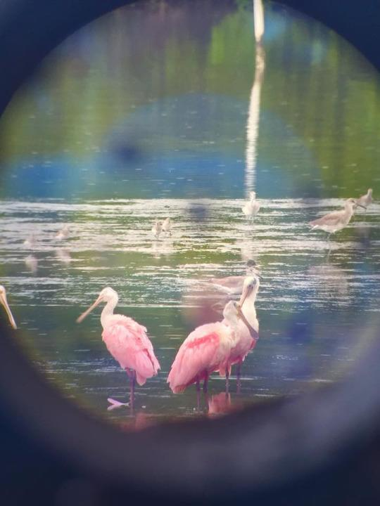 "<p>On a rainy day at the Ding Darling National Wildlife Refuge on Sanibel Island, Florida, I snapped this photo through binoculars of roseate spoonbills feeding in the mudflats. <i>—Marybeth Bond, <a href=""http://www.gutsytraveler.com"" rel=""nofollow noopener"" target=""_blank"" data-ylk=""slk:The Gutsy Traveler"" class=""link rapid-noclick-resp"">The Gutsy Traveler</a></i><br></p>"
