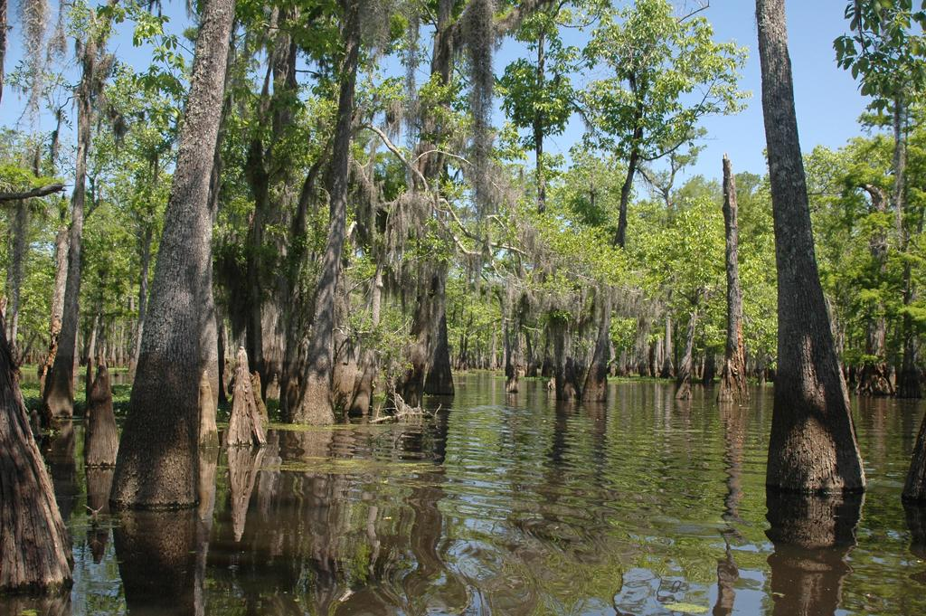 """The Great Escape"" filmed in the swamps of Louisiana."