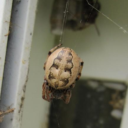 """<div class=""""caption-credit""""> Photo by: Filckr</div><div class=""""caption-title"""">Catch Spiders</div>I hate spiders. Outside of the Mothman, there aren't many things I'm more afraid of than spiders and I won't go near them. Consequently, Casey kills all the spiders in our house and that's the way it's going to stay. If I happen to wake up in the middle of the night and Casey has a spider on her forehead, I'll try to wake and warn her from a distance before I head to sleep on the couch for the next few weeks."""