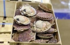 "French and British fishermen fail to end their ""Scallop Wars"" over access to waters rich in the tasty mollusks"