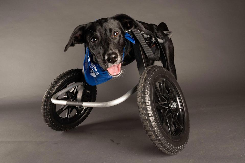 <p>(Team Fluff)<br>Pets With Disabilities</p>