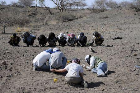 Team members crawl at the area where the paratype jaw (BRT-VP-3/14) was found, searching for more pieces of the specimen, in Ethiopia in this image released to Reuters on May 26, 2015. REUTERS/Yohannes Haile-Selassie/Cleveland Museum of Natural History/Handout via Reuters