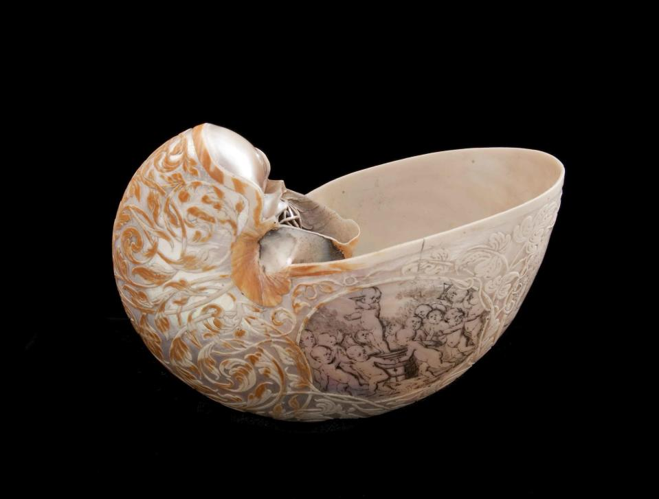Hans Sloane's nautilus shell – beautifully carved, it is easy to imagine why this shell was one of Hans Sloane's favourite specimens. It was made in the seventeenth century and was part of Sloane's vast collection, which later formed the core of the British and Natural History museums. (Natural History Museum)