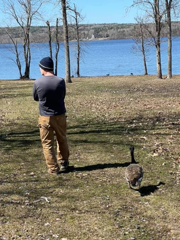 George met this Canada Goose at his Washademoak cottage last week, where the two were inseparable.