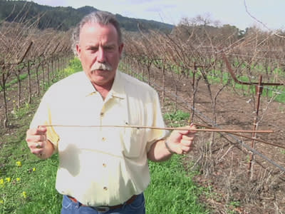 California farmers hire dowsers to find water