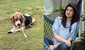 Is my dog secretly Vegan? Twinkle Khanna shares a hilarious post of her canine eating stems