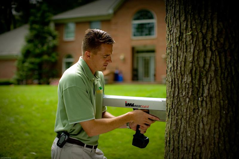 This undated publicity photo provided by SavATree shows an arborist using a resistograph to detect tree decay, which can help determine a tree's stability. (AP Photo/SavATree)