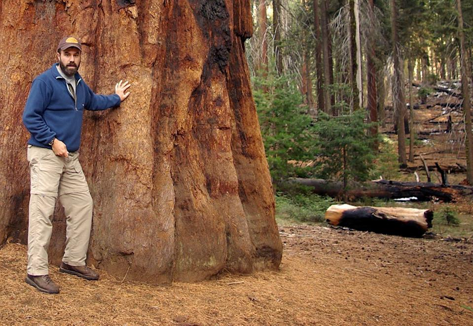 Ed Keith stands next to the huge trunk of an Oregon redwood tree.