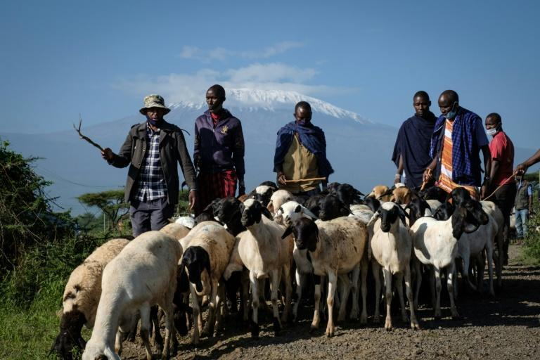 Fenced farming threatens the timeless lifestyle of Masai herders, say local landowners