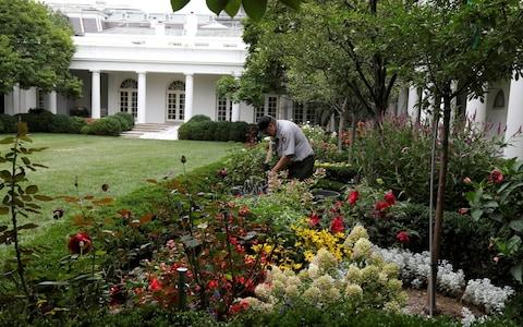 A U.S. National Park Service gardener works in the Rose Garden at the White House in Washington - Credit: Reuters