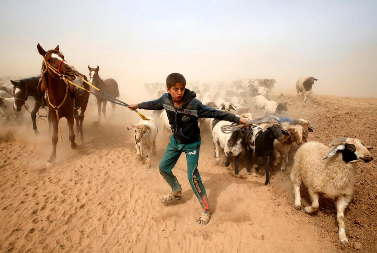 FILE PHOTO -  A displaced Iraqi boy leads his animals to safety after escaping from Islamic State controlled village of Abu Jarboa during clashes with IS militants near Mosul, Iraq November 1, 2016. REUTERS/Ahmed Jadallah/File Photo                     REUTERS PICTURES OF THE YEAR 2016 - SEARCH 'POY 2016' TO FIND ALL IMAGES