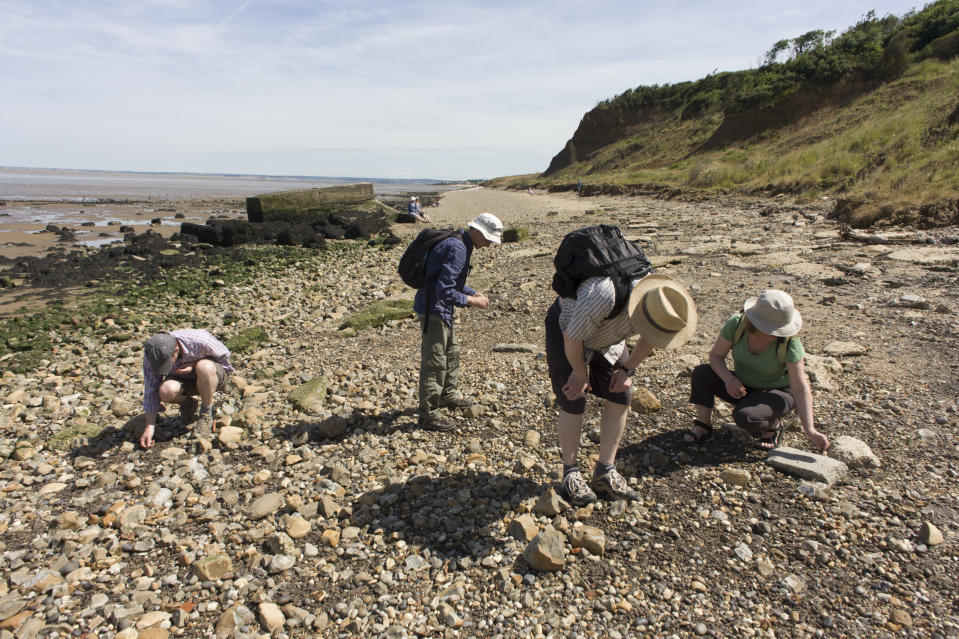 Fossil hunters looking among Eocene rocks on the Isle of Sheppey (Getty Images)