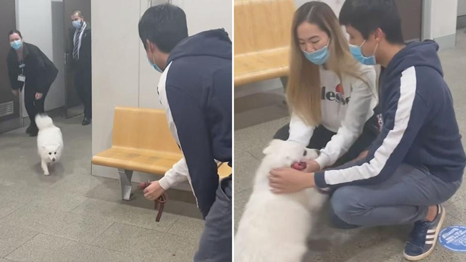Pictured is Atlas, the dog, running to her owners after being reunited.