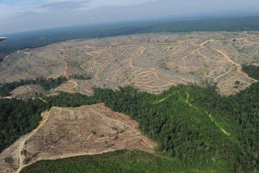 Greenpeace alleged on Wednesday that US toy maker Mattel used materials sourced from Indonesia's dwindling forests