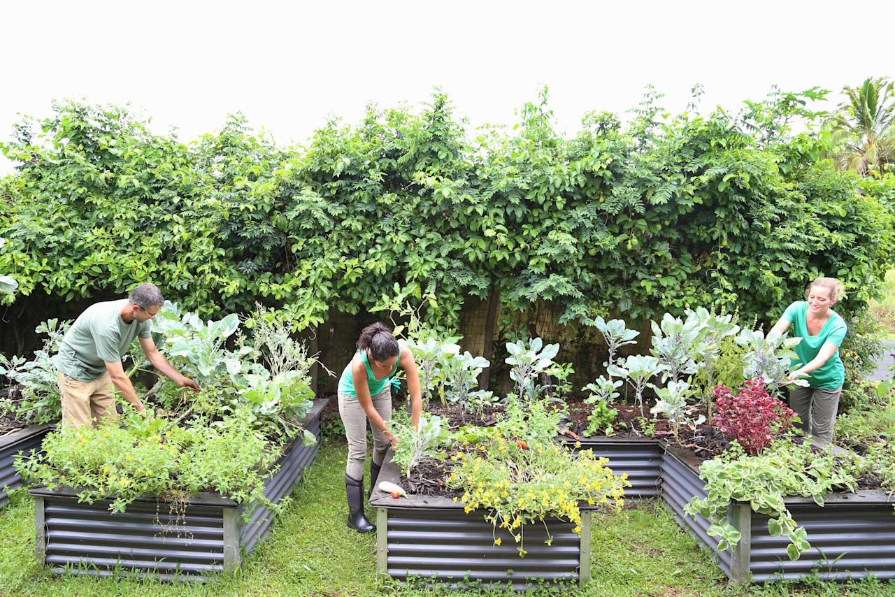 8 Great Tips To Start A Community Garden