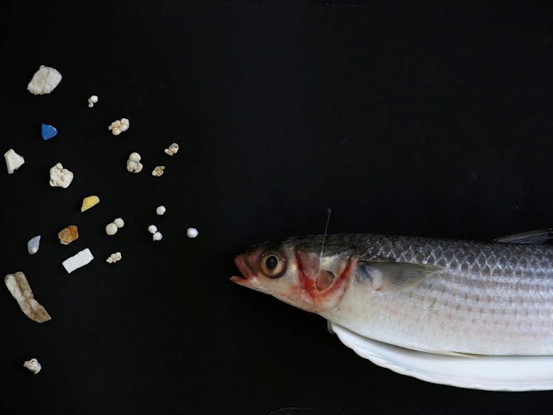fish microplastics