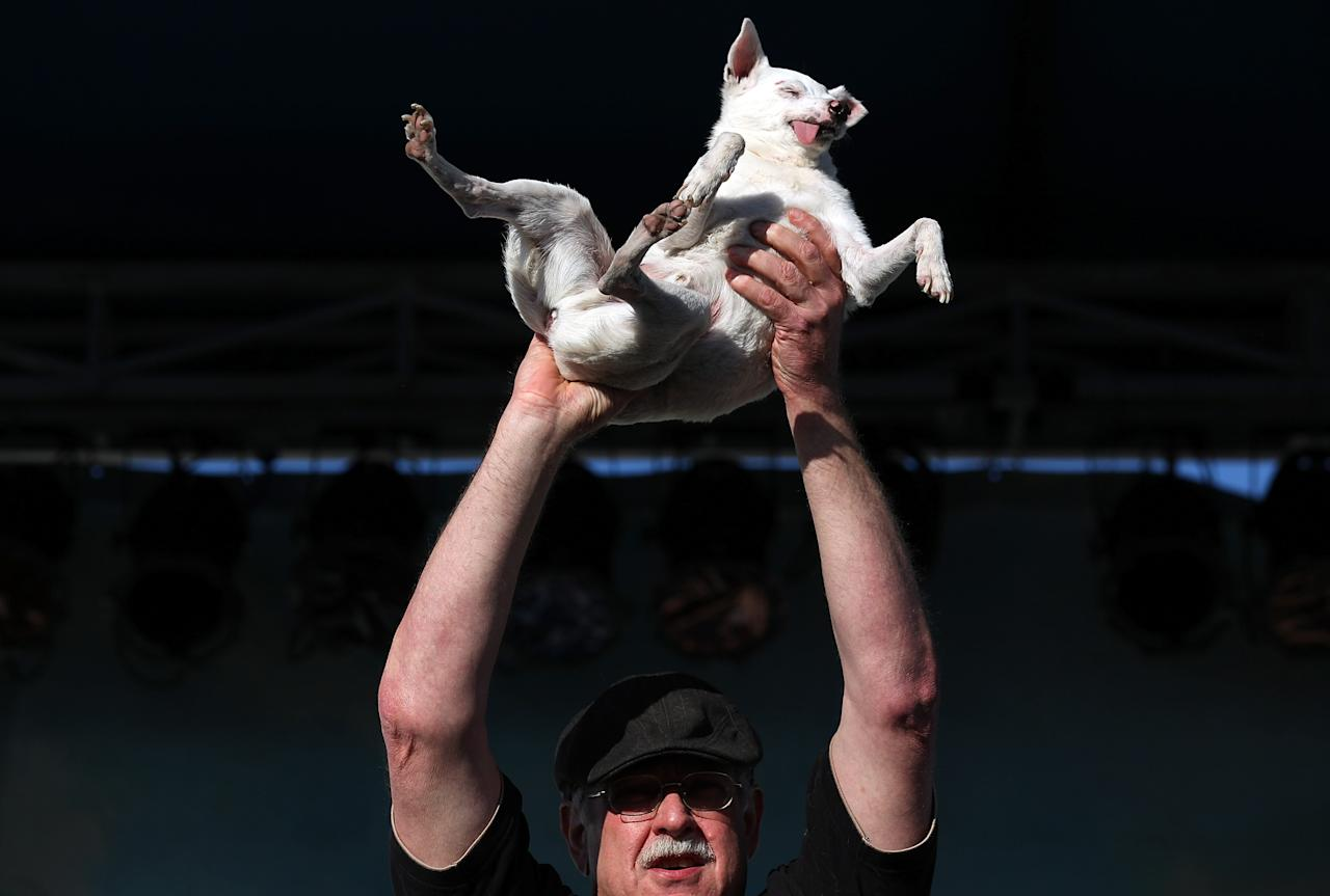 PETALUMA, CA - JUNE 24:  A contestant holds up his ugly dog during the 23rd Annual World's Ugliest Dog Contest at the Sonoma-Marin County Fair on June 24, 2011 in Petaluma, California.  Yoda won the $1,000 top prize as the world's ugliest dog.  (Photo by Justin Sullivan/Getty Images)