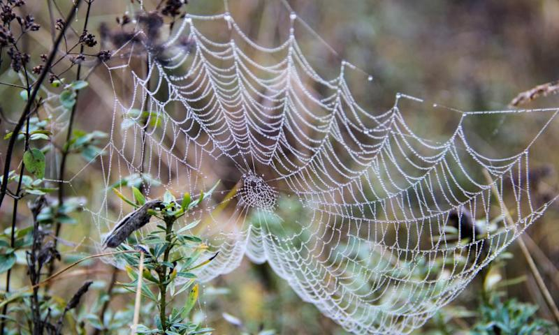 Spider silk is stronger than steel on a per weight basis.