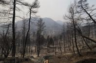 A burnt forest during a wildfire in Kourkouloi village on the island of Evia, about 150 kilometers (93 miles) north of Athens, Greece, Thursday, Aug. 5, 2021. Forest fires fueled by a protracted heat wave raged overnight and into Thursday in Greece, threatening the archaeological site at the birthplace of the modern Olympics and forcing the evacuation of dozens of villages. (AP Photo/Thodoris Nikolaou)