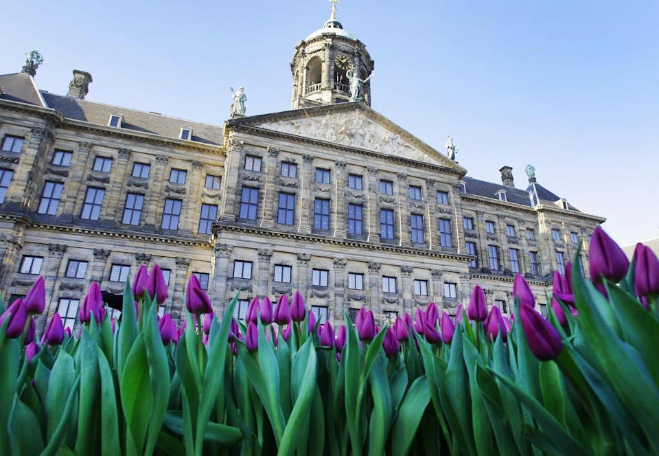 <p>National Tulip Day in Dam Square, when everyone is invited to pick their own tulip for free from a specially constructed 'picking garden'</p>