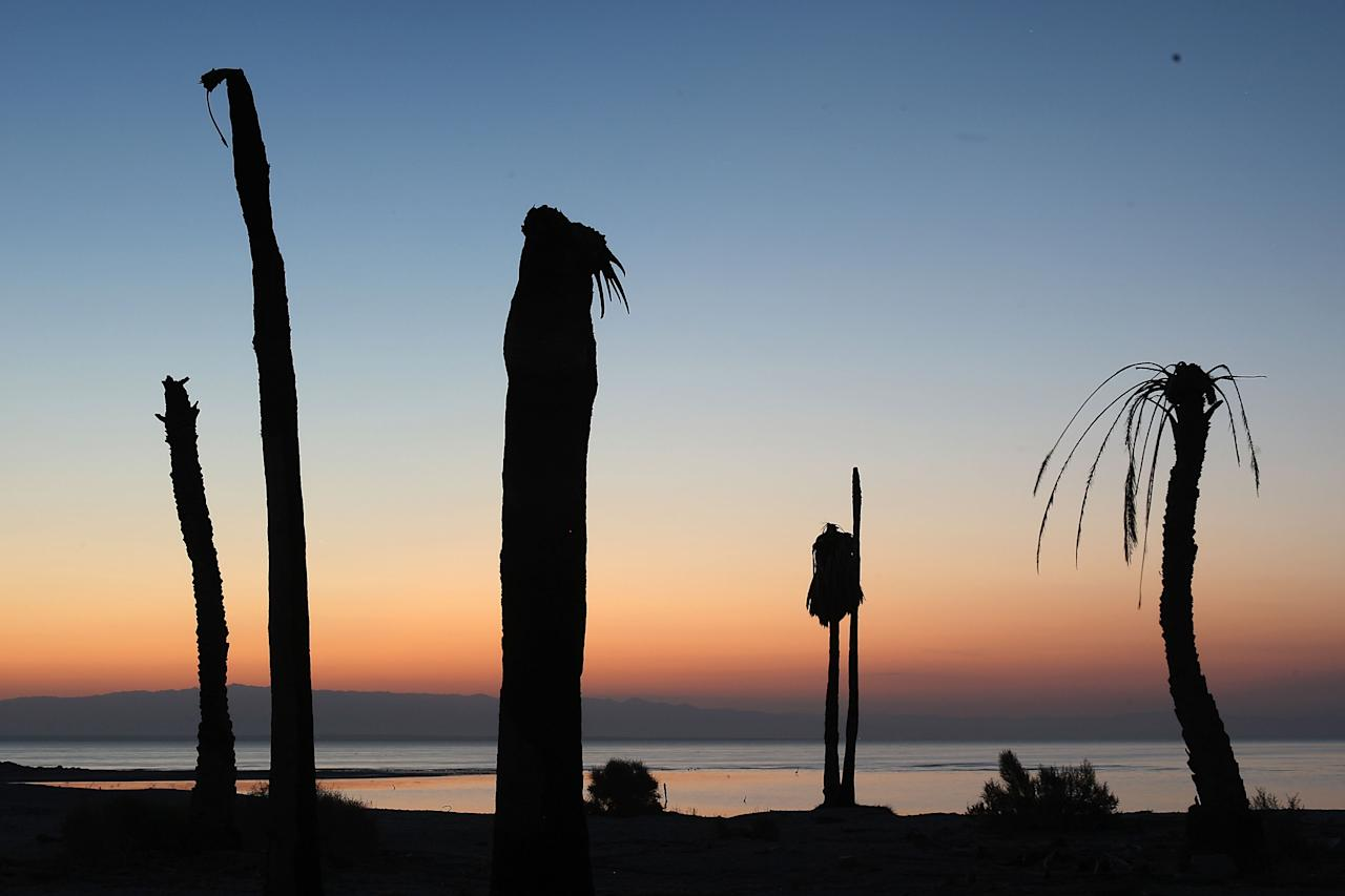 "SALTON CITY, CA - JULY 7:  Dead palm trees stand at a former yacht club on the shore of the Salton Sea, the biggest lake in California, which has dried up and refilled numerous times, on July 7, 2011 in Salton City, California. Scientists have discovered that human-created changes effecting the Salton Sea appear to be the reason why California's massive ""Big One"" earthquake is more than 100 years overdue and building up for the greatest disaster ever to hit Los Angeles and Southern California. Researchers found that strands of the San Andreas Fault under the 45-mile long rift lake have have generated at least five 7.0 or larger quakes about every 180 years. This ended in the early 20th century when authorities stopped massive amounts of Colorado River water from periodically flooding the into this sub-sea level desert basin. Such floods used to regularly trigger major quakes and relieve building seismic pressure but the last big earthquake on the southern San Andreas was about 325 years ago. Dangerous new fault branches that could trigger a 7.8 quake have recently been discovered under the Salton Sea.  (Photo by David McNew/Getty Images)"