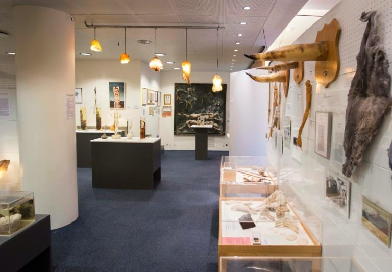 There are 286 exhibited biological specimens at the Icelandic Phallological Museum in Reykjavik