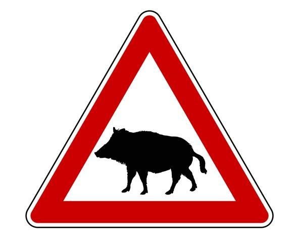 'Beware the boar' sign planned for UK roads
