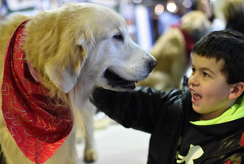 The two-day canine extravaganza, an annual bright spot with Fashion Week in the dead of winter, culminates Tuesday night with the selection of Best in Show in New York's Madison Square Garden (AFP Photo/Timothy A. Clary)