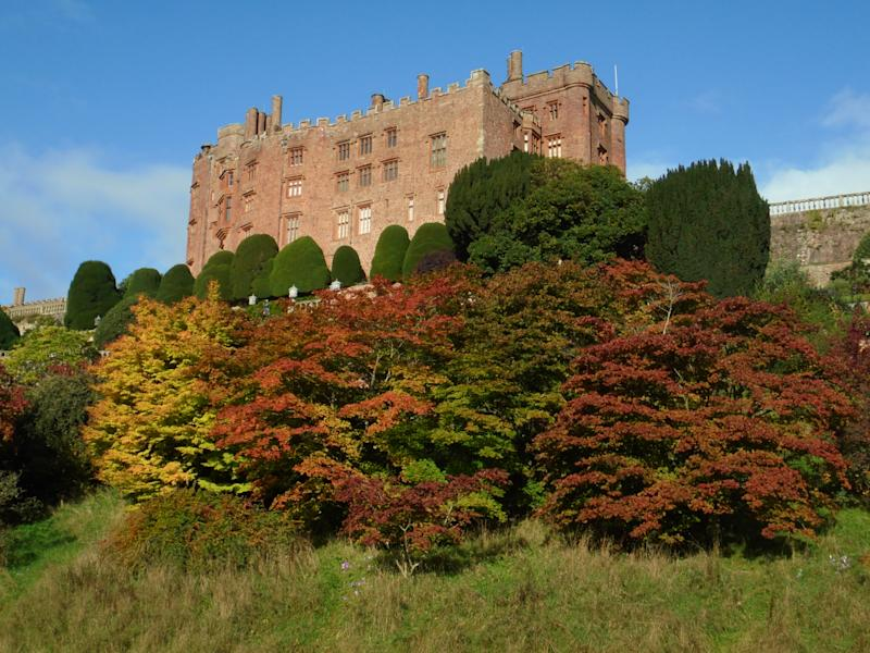 Acers starting to turn a deep red at Powis Castle, Powys in Wales (David Swanton/National Trust Images/PA)