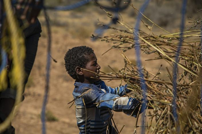 "A boy helps collect the remains of a sesame crop that was devastated by locusts in Somalia. <span class=""copyright"">(Will Swanson / For The Times)</span>"