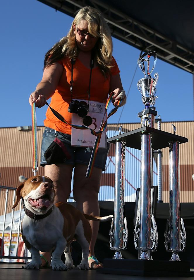 PETALUMA, CA - JUNE 21: Tammie Barbee stands with her dog Walle, a basset beagle mix, during the 25th annual World's Ugliest Dog contest at the Sonoma Marin Fair on June 21, 2013 in Petaluma, California. Walle, a basset and beagle mix won the honor of being the world's ugliest dog. (Photo by Justin Sullivan/Getty Images)