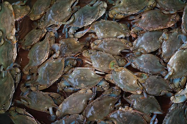 <p>Soft shell crabs lie in a wooden box before they are sorted to be sold on Tangier Island, Virginia, Aug. 2, 2017. (Photo: Adrees Latif/Reuters) </p>