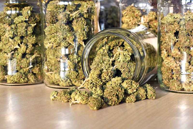Multiple clear jars on a counter that are packed with cannabis buds.