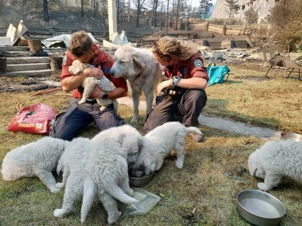Firefighters brought food and water to Tricia Thorpe's animals, who survived the devastating wildfire that swept through Lytton, B.C., on June 30. (Submitted by Tricia Thorpe - image credit)