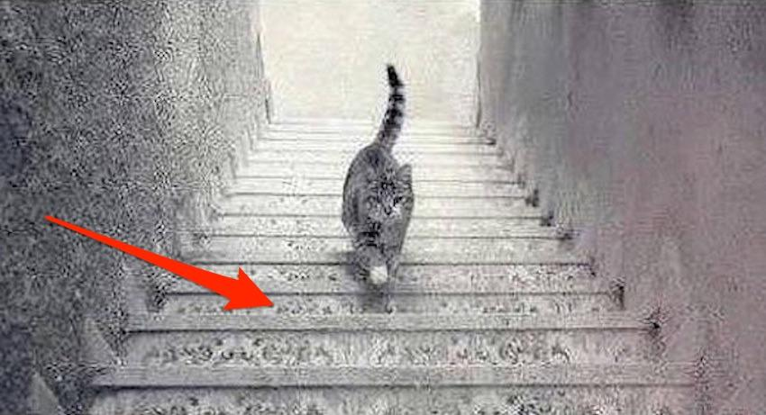 mosaic up or down cat