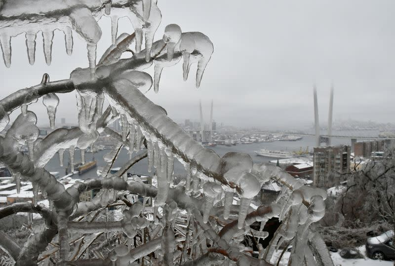 FILE PHOTO: Branches of a tree are coated with ice after freezing rain with a bridge over Golden Horn bay in the background in the far eastern city of Vladivostok, Russia