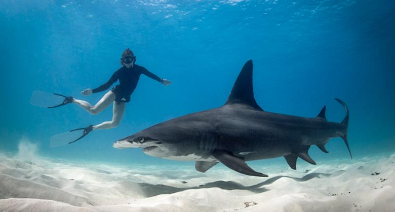 Pictured is a stock image of a shark with a swimmer in the water.