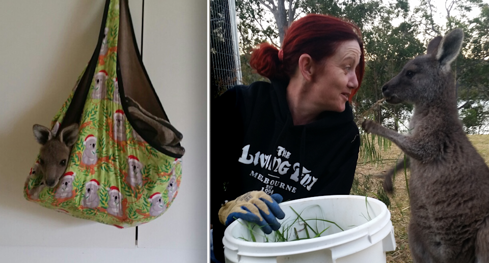 Left - Joey Clover in a tiny hanging Christmas pouch. Right - Rae Harvey holds a bucket and feeds joey Clover.