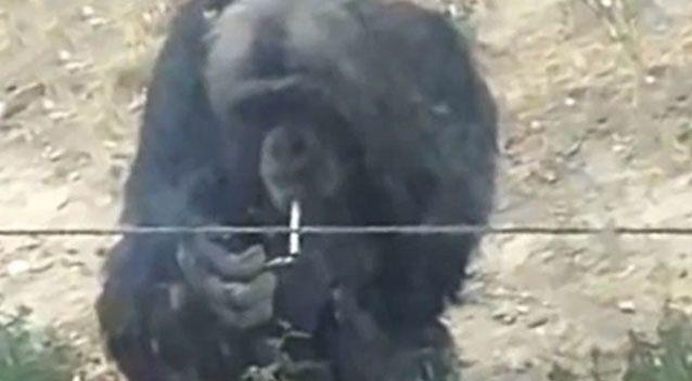 The shocking images have gone viral since being posted online. Photo: Youtube